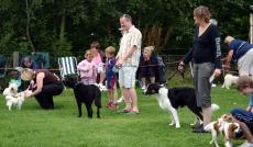 DogShow 1